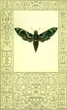 Χαριτωμένη πλαισιωμένη πράσινη πεταλούδα με το πρόσωπο Στοκ Εικόνες