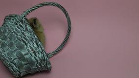 Χαριτωμένη συνεδρίαση κουνελιών σε ένα καλάθι απόθεμα βίντεο