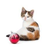 Χαριτωμένη συνεδρίαση γατακιών βαμβακερού υφάσματος δίπλα σε μια διακόσμηση Χριστουγέννων σε ένα whi Στοκ Εικόνες