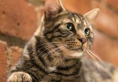 Χαριτωμένη τιγρέ γάτα Στοκ Φωτογραφίες