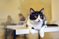 Χαριτωμένη τιγρέ γάτα Στοκ Εικόνα
