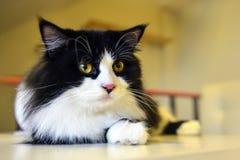 Χαριτωμένη τιγρέ γάτα Στοκ εικόνες με δικαίωμα ελεύθερης χρήσης