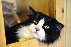 Χαριτωμένη τιγρέ γάτα Στοκ Φωτογραφία