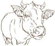 Χαριτωμένη φυσιοκρατική αγελάδα Στοκ Εικόνες
