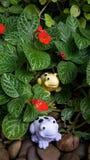 Χαριτωμένοι βάτραχοι στον κήπο Στοκ Εικόνα