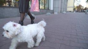 Χαριτωμένοι μοντέρνοι περίπατοι γυναικών στην οδό με το μικρό σκυλί απόθεμα βίντεο
