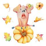 Χαριτωμένοι χοίροι με το συρμένο χέρι watercolor προτύπων ημέρας των ευχαριστιών 2019 συγκομιδών κολοκυθών στοκ εικόνες με δικαίωμα ελεύθερης χρήσης