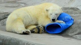 Χαριτωμένοι cub πολικών αρκουδών ύπνοι φιλμ μικρού μήκους