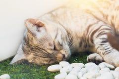 Χαριτωμένος άσπρος ύπνος γατών τιγρών Στοκ εικόνες με δικαίωμα ελεύθερης χρήσης