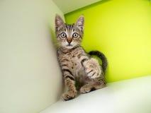 Χαριτωμένος λίγη γάτα Στοκ Φωτογραφία