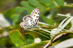 Χαριτωμένος λίγη πεταλούδα στο πράσινο φύλλο Στοκ Φωτογραφίες