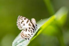 Χαριτωμένος λίγη πεταλούδα στο πράσινο φύλλο Στοκ φωτογραφία με δικαίωμα ελεύθερης χρήσης