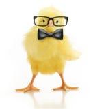 Χαριτωμένος λίγο κοτόπουλο στα γυαλιά Στοκ εικόνα με δικαίωμα ελεύθερης χρήσης