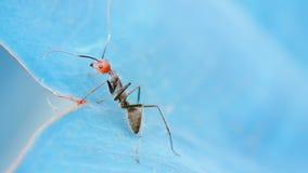Χαριτωμένος λίγο μυρμήγκι Στοκ εικόνες με δικαίωμα ελεύθερης χρήσης