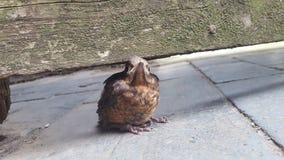 Χαριτωμένος λίγο πουλί Στοκ Εικόνες