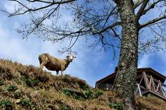 χαριτωμένος λίγο πρόβατο Στοκ εικόνα με δικαίωμα ελεύθερης χρήσης