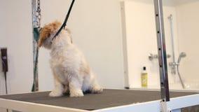 Χαριτωμένος λίγο σκυλί που εξετάζει τη κάμερα φιλμ μικρού μήκους
