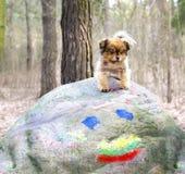 Χαριτωμένος λίγο σκυλί που στέκεται στη μεγάλη πέτρα Στοκ Φωτογραφίες