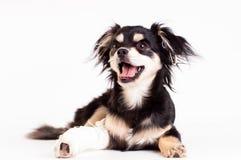 Χαριτωμένος λίγο σκυλί στο άσπρο υπόβαθρο στο στούντιο Στοκ Φωτογραφία