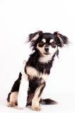 Χαριτωμένος λίγο σκυλί στο άσπρο υπόβαθρο στο στούντιο Στοκ εικόνες με δικαίωμα ελεύθερης χρήσης