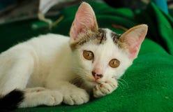 Χαριτωμένος λίγο kittencat στοκ φωτογραφίες