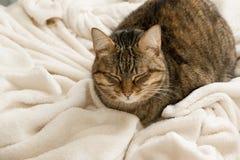 Χαριτωμένος εσωτερικός ύπνος γατών στο θερμό άνετο καρό, διάστημα για το κείμενο Στοκ Εικόνες