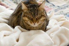 Χαριτωμένος εσωτερικός ύπνος γατών στο θερμό άνετο καρό, διάστημα για το κείμενο Στοκ φωτογραφία με δικαίωμα ελεύθερης χρήσης