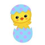 Χαριτωμένος κίτρινος νεοσσός που εκκολάπτεται από ένα αυγό Πάσχα ευτυχές Στοκ εικόνες με δικαίωμα ελεύθερης χρήσης