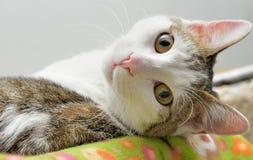 Χαριτωμένος καθορισμός γατών Στοκ εικόνα με δικαίωμα ελεύθερης χρήσης