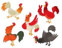 Χαριτωμένος κινούμενων σχεδίων κοκκόρων διανυσματικός απεικόνισης κοτόπουλου αγροκτημάτων ζώων αγροτικός χαρακτήρας κοκκόρων πουλ Στοκ Εικόνες