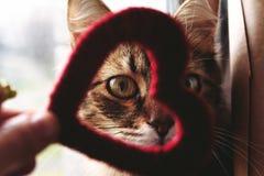 Χαριτωμένος λίγη εγχώρια γάτα που κοιτάζει μέσω της κόκκινης καρδιάς στο χέρι στο θόριο στοκ φωτογραφία με δικαίωμα ελεύθερης χρήσης