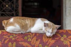 Χαριτωμένος λίγος ύπνος γατακιών γατών/γατακιών μωρών επάνω Στοκ εικόνες με δικαίωμα ελεύθερης χρήσης
