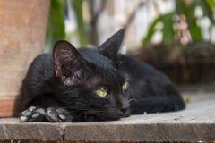 Χαριτωμένος λίγος ύπνος γατακιών γατών/γατακιών μωρών επάνω Στοκ Φωτογραφίες