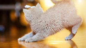 Χαριτωμένος λίγο γατάκι στοκ εικόνες