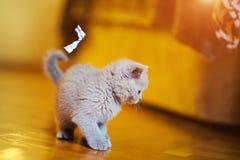 Χαριτωμένος λίγο γατάκι στοκ φωτογραφία με δικαίωμα ελεύθερης χρήσης