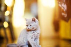 Χαριτωμένος λίγο γατάκι στοκ εικόνες με δικαίωμα ελεύθερης χρήσης