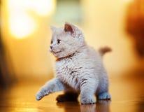 Χαριτωμένος λίγο γατάκι στοκ εικόνα με δικαίωμα ελεύθερης χρήσης