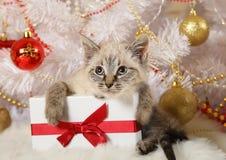 Χαριτωμένος λίγο γατάκι με ένα δώρο στοκ φωτογραφίες