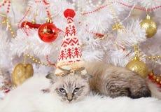 Χαριτωμένος λίγο γατάκι σε Χριστούγεννα ΚΑΠ στοκ εικόνα