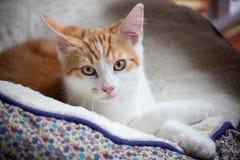 Χαριτωμένος λίγο γατάκι Στοκ φωτογραφίες με δικαίωμα ελεύθερης χρήσης
