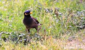 Χαριτωμένος λίγο πουλί στοκ φωτογραφίες με δικαίωμα ελεύθερης χρήσης