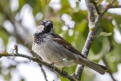 Χαριτωμένος λίγο πουλί σε ένα δέντρο Στοκ εικόνα με δικαίωμα ελεύθερης χρήσης