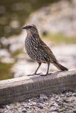 Χαριτωμένος λίγο πουλί σε ένα κούτσουρο στοκ φωτογραφίες