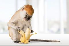 Χαριτωμένος πίθηκος με την μπανάνα στο ελαφρύ υπόβαθρο Στοκ Φωτογραφία