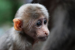 χαριτωμένος πίθηκος μωρών Στοκ εικόνες με δικαίωμα ελεύθερης χρήσης