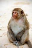 Χαριτωμένος πίθηκος στην παραλία, πλήρες σώμα, κινηματογράφηση σε πρώτο πλάνο Στοκ Φωτογραφία