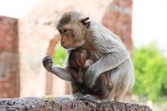 χαριτωμένος πίθηκος Στοκ φωτογραφία με δικαίωμα ελεύθερης χρήσης