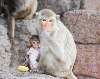 χαριτωμένος πίθηκος Στοκ Φωτογραφία