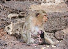 χαριτωμένος πίθηκος Στοκ Φωτογραφίες