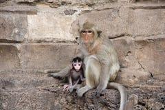 χαριτωμένος πίθηκος Στοκ φωτογραφίες με δικαίωμα ελεύθερης χρήσης